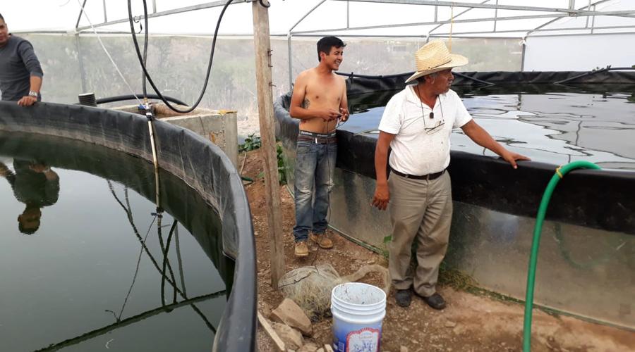 Pescados de criadero, una alternativa para los pescadores de San Francisco Yosocuta