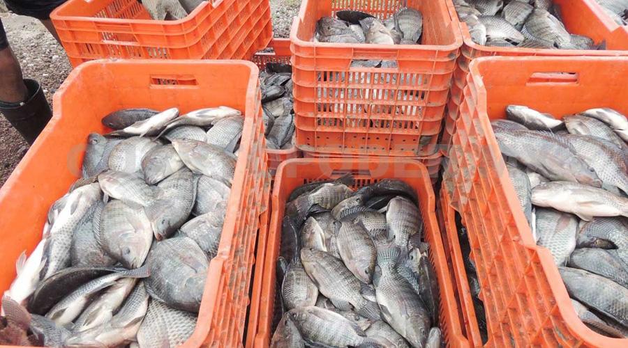 Conapesca estima aumento de 10 % en consumo de mariscos por temporada | El Imparcial de Oaxaca