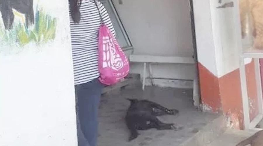 Indignante: Carnicero acuchilla y mata a perro | El Imparcial de Oaxaca