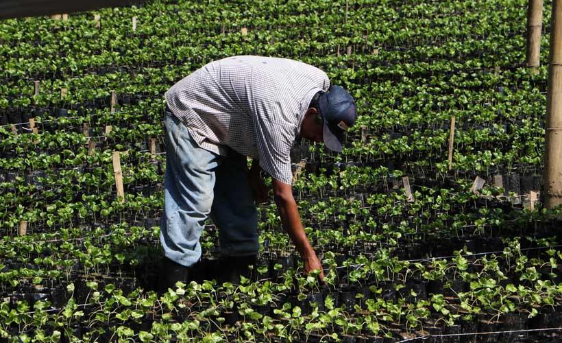 Sector agropecuario de Oaxaca cayó 50% con EPN | El Imparcial de Oaxaca