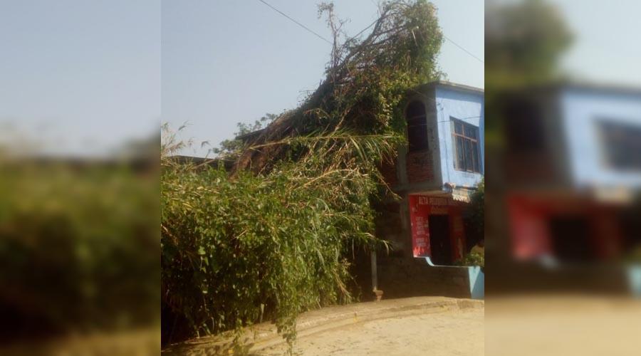 Árbol cae sobre casa por las fuertes lluvias | El Imparcial de Oaxaca