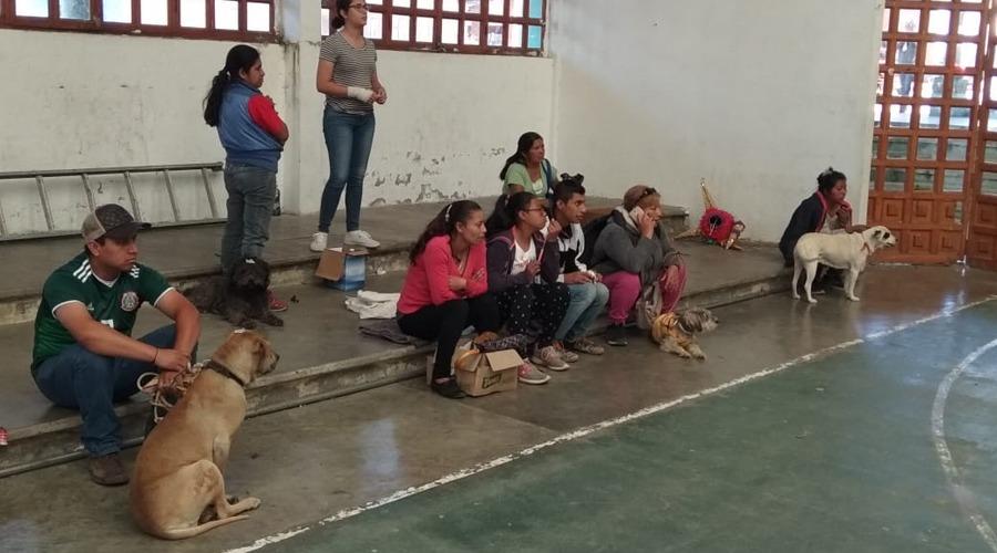 Asociaciones exigen campañas permanentes de esterilización en Oaxaca