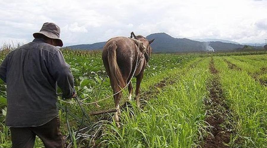 Buscan reactivar el  campo en la Mixteca