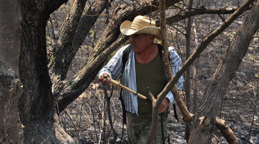 A falta de equipo, apagan incendio con manos y palos en San Andrés Zautla | El Imparcial de Oaxaca