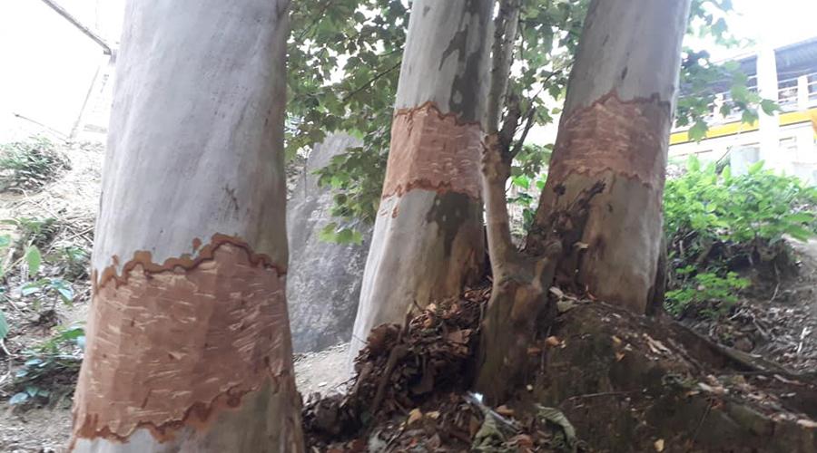 Denuncian pobladores de Huautla de Jiménez serios daños al medio ambiente