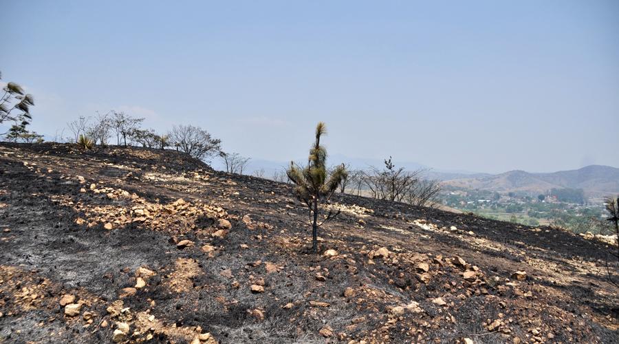 Oaxaca, sin plan estatal contra incendios