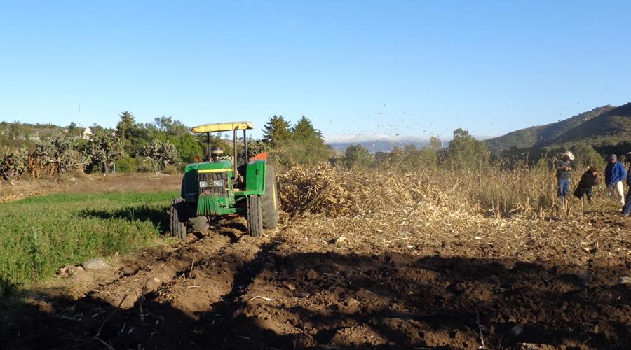 En la Mixteca, se perdió la siembra  de maíz de cazuela