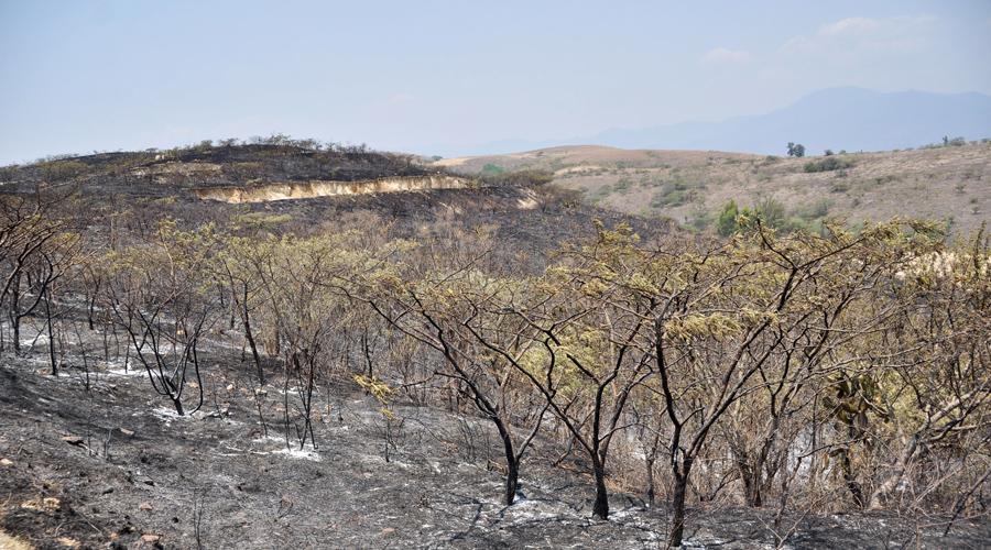 Incendios consumen 38 mil hectáreas de Oaxaca   El Imparcial de Oaxaca