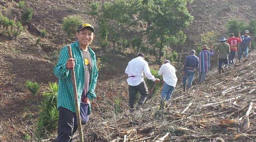 Harán crecer la  milpa en la Mixteca | El Imparcial de Oaxaca