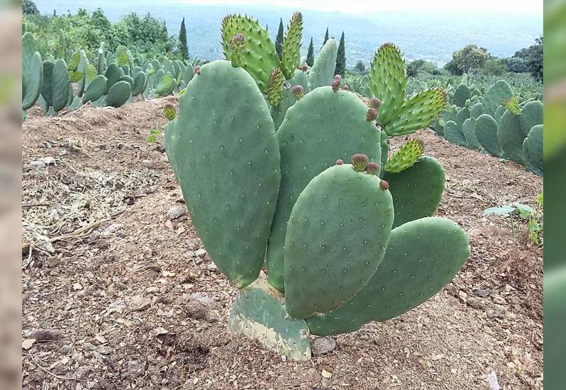 Superalimentos buenos para la nutrición y el planeta | El Imparcial de Oaxaca