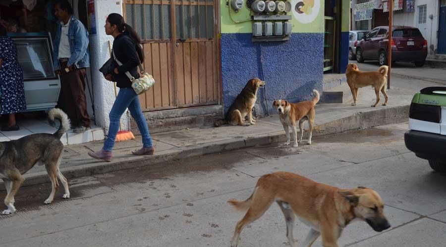 Preocupa abandono de  perros en Huajuapan de León, Oaxaca