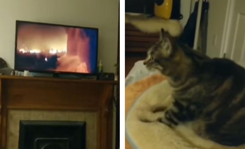 Video: Gato aficionado a películas de acción se hace viral en las redes | El Imparcial de Oaxaca