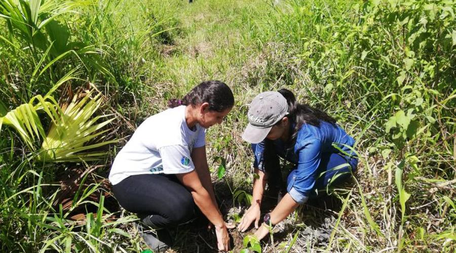 Ofrecen taller de reforestación en Tuxtepec | El Imparcial de Oaxaca