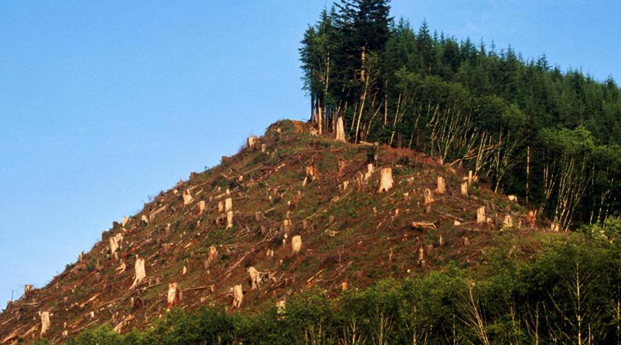 Deforestación, un mal que aqueja a todos los países del mundo | El Imparcial de Oaxaca