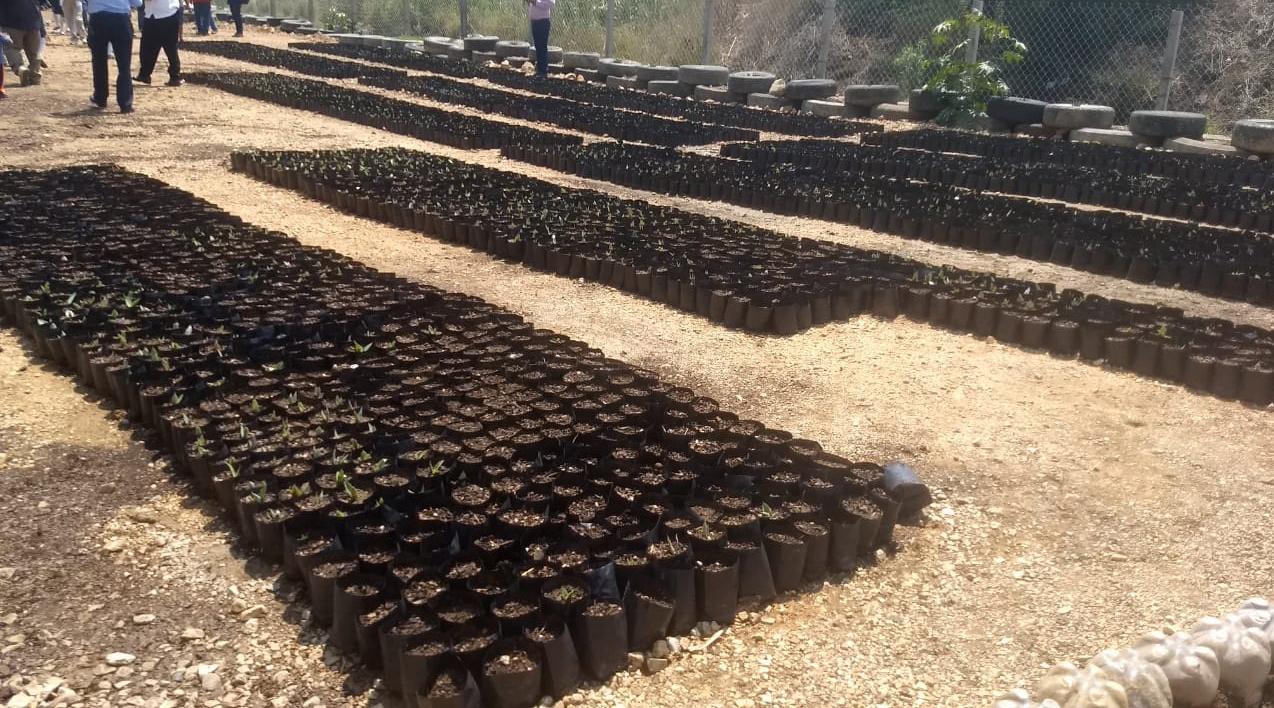 Continúa producción de agave en Telesecundaria El Manantial en Zaachila | El Imparcial de Oaxaca
