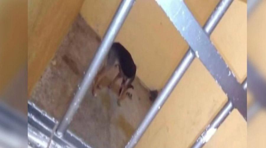 Video: Liberan al perro que tenían encarcelado en Lachigoló | El Imparcial de Oaxaca