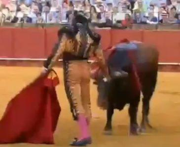 Video: Torero limpia lágrimas de un toro momentos antes de matarlo