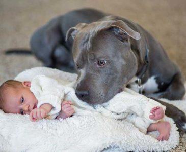 Niño es salvado de morir en incendio por un perro Pitbull