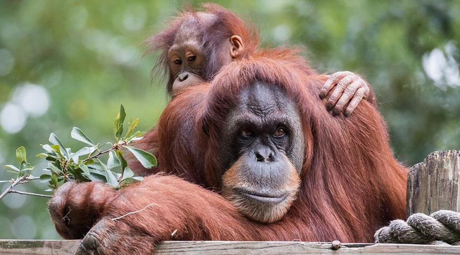 Pérdidas en áreas boscosas amenazan a la población de primates | El Imparcial de Oaxaca