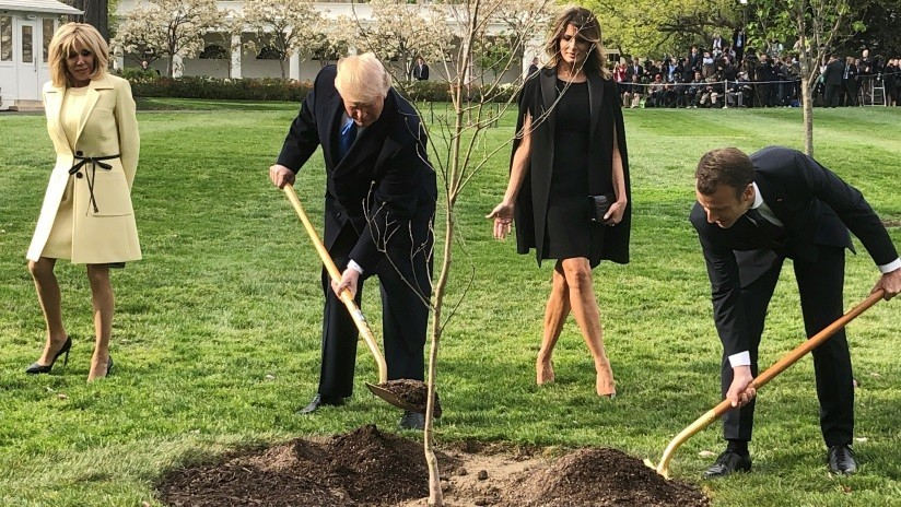 Muere el árbol plantado por Trump y Macron en la Casa Blanca | El Imparcial de Oaxaca