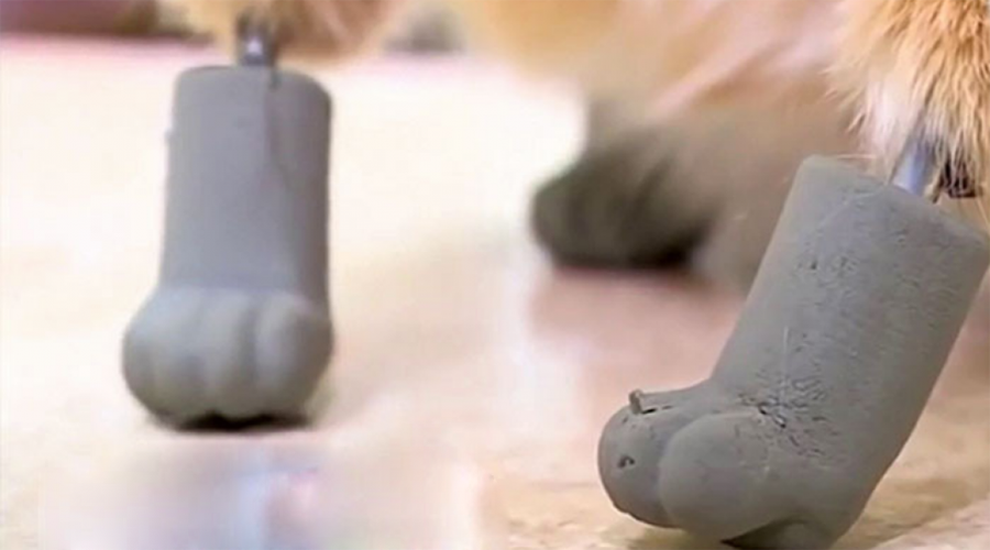 Video: Conoce al primer gato biónico; tiene cuatro patas de titanio   El Imparcial de Oaxaca