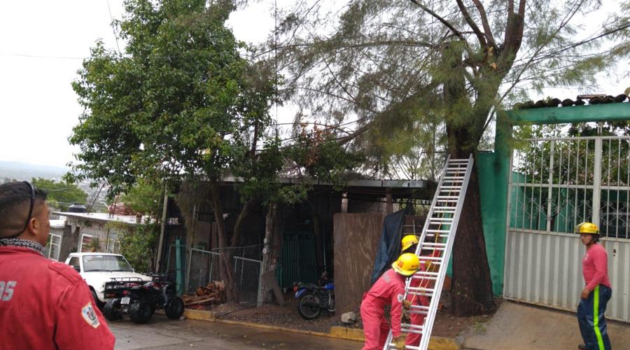 Lluvias provocan la caída  de árboles en Huajuapan