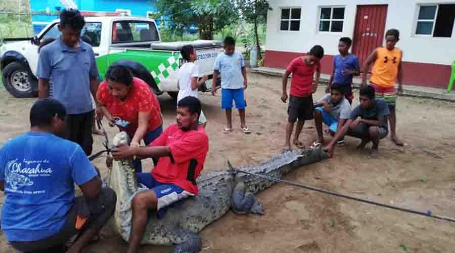 Atrapan a gigantesco cocodrilo en Río Grande