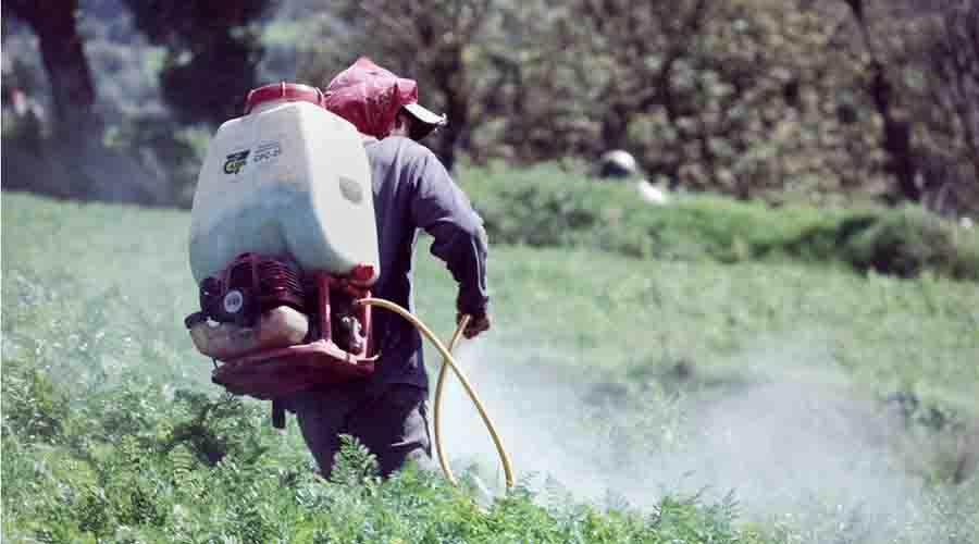 En la Mixteca, disminuirán problema  de químicos en cultivos | El Imparcial de Oaxaca