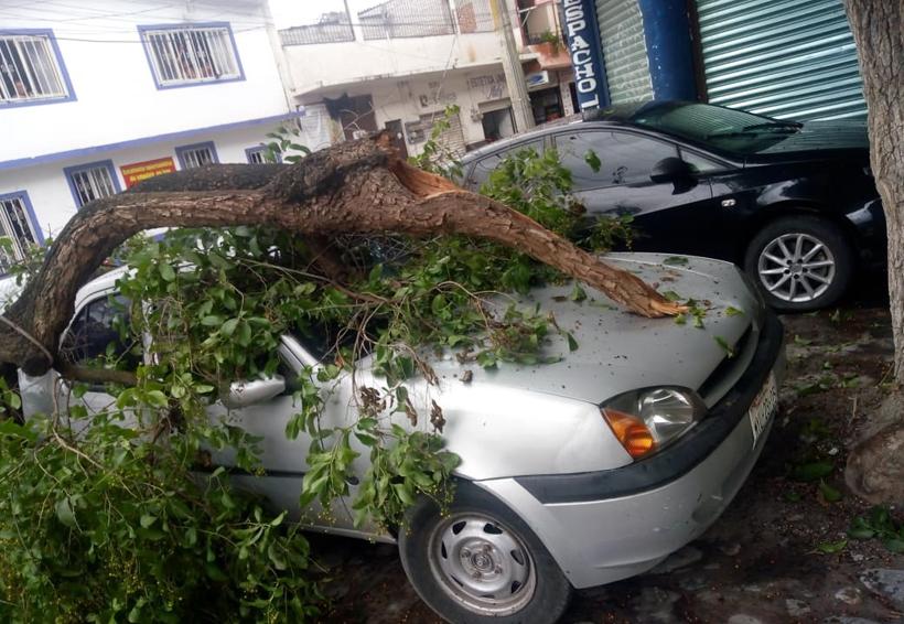En Huajuapan cae pesado tronco sobre un vehículo | El Imparcial de Oaxaca