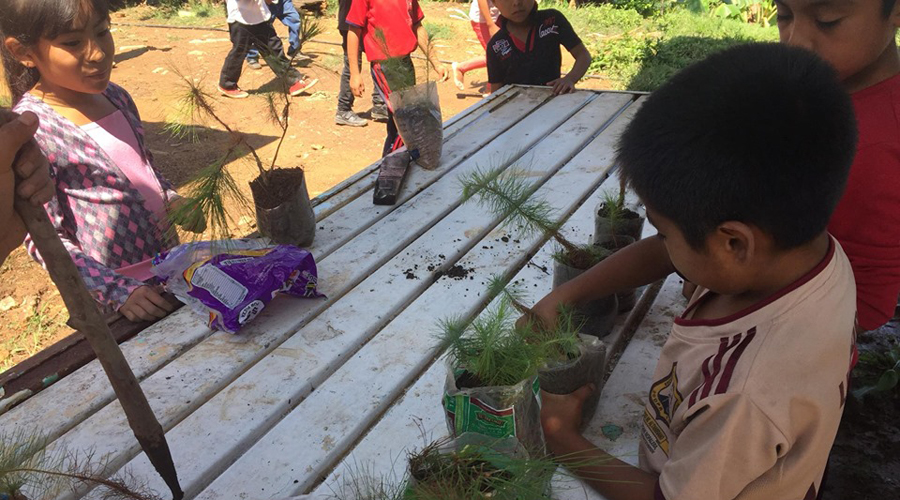 Niños de la Mixteca, reforestan terrenos de la población