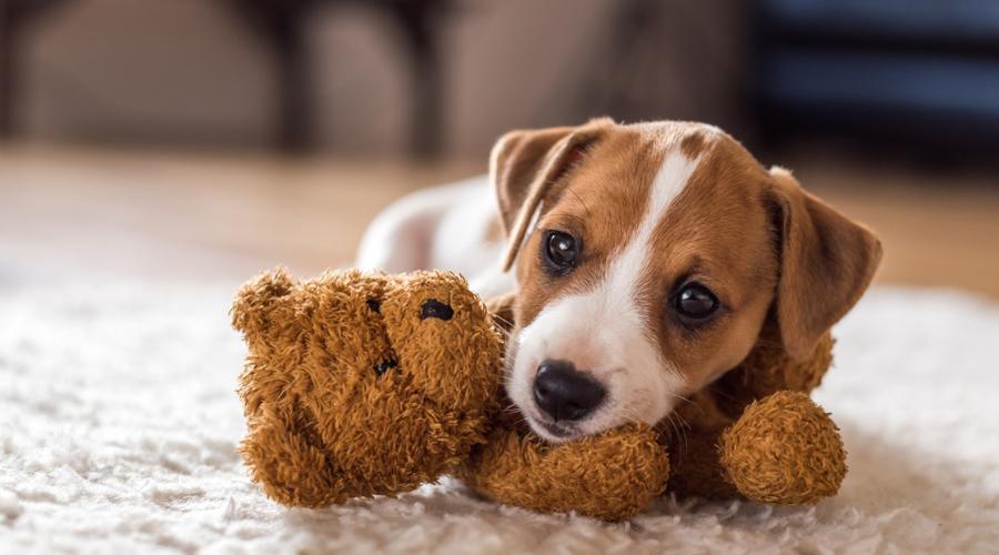 Las señales de que tu perro te ama y te tiene confianza | El Imparcial de Oaxaca