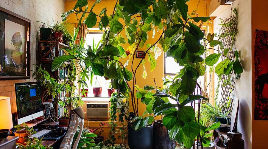 Jungle apartment: la nueva tendencia para los amantes de las plantas