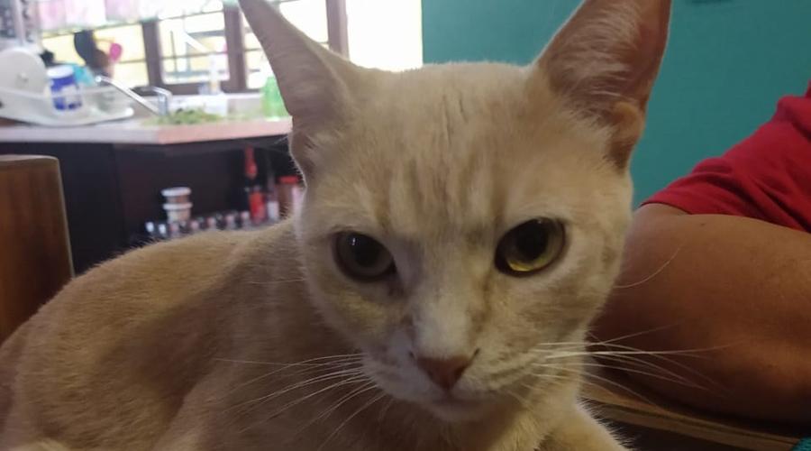 Razones para tener un  gato | El Imparcial de Oaxaca