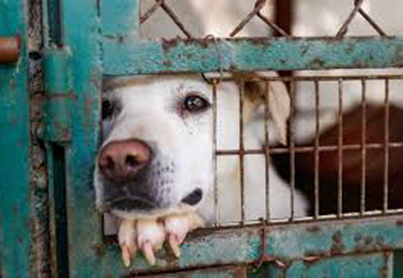 En Oaxaca piden considerar a los animales seres sintientes | El Imparcial de Oaxaca