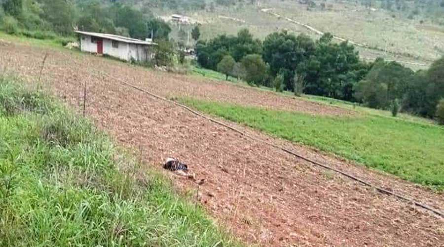 Encuentran cadáver de mujer en un terreno de siembra en Tlaxiaco   El Imparcial de Oaxaca