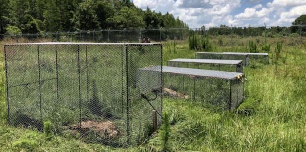 Una granja de cadáveres y la ciencia emergente que ayuda a resolver crímenes   El Imparcial de Oaxaca