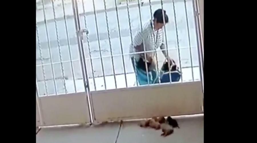 Video: Mujer abandona cachorros recién nacidos en la casa de un vecino | El Imparcial de Oaxaca