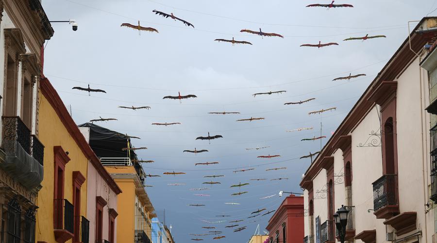 Aves de Manuel Molina encuentran el paraíso en Oaxaca