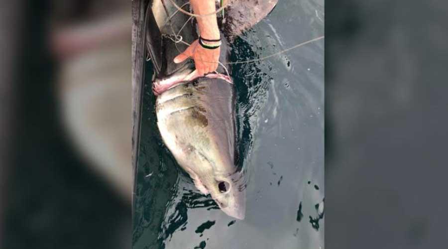 Investigadores encuentran a tiburón herido por desechos plásticos en el mar | El Imparcial de Oaxaca