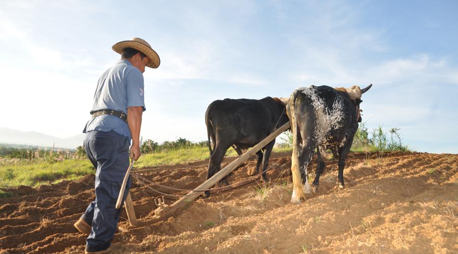 El 63% de los municipios de Oaxaca cuenta con algún grado de sequía