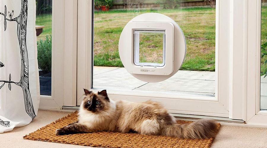 Crean prototipo de puerta inteligente para gatos | El Imparcial de Oaxaca