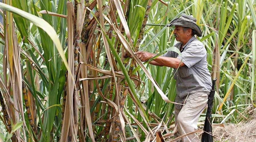 Alertan a productores  de caña por fraude | El Imparcial de Oaxaca