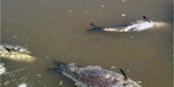 Ecocidio en ríos de Tuxtepec
