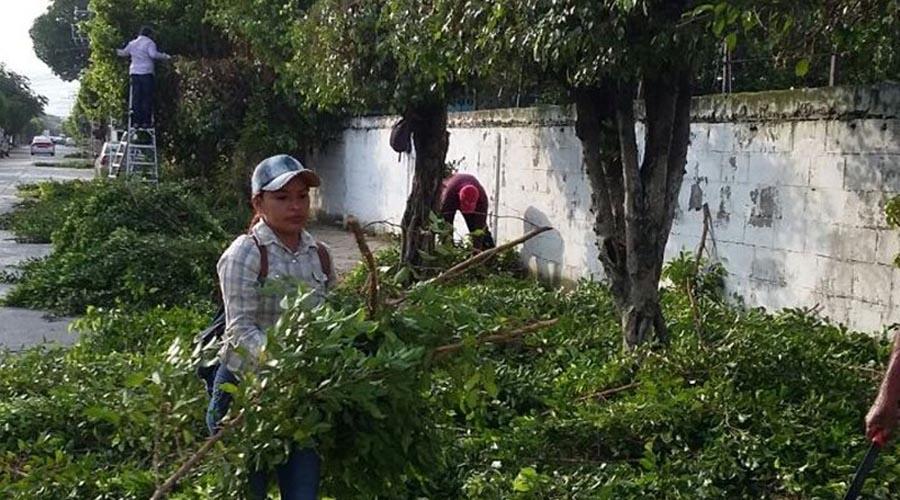Necesario, diagnóstico  del arbolado urbano de Oaxaca