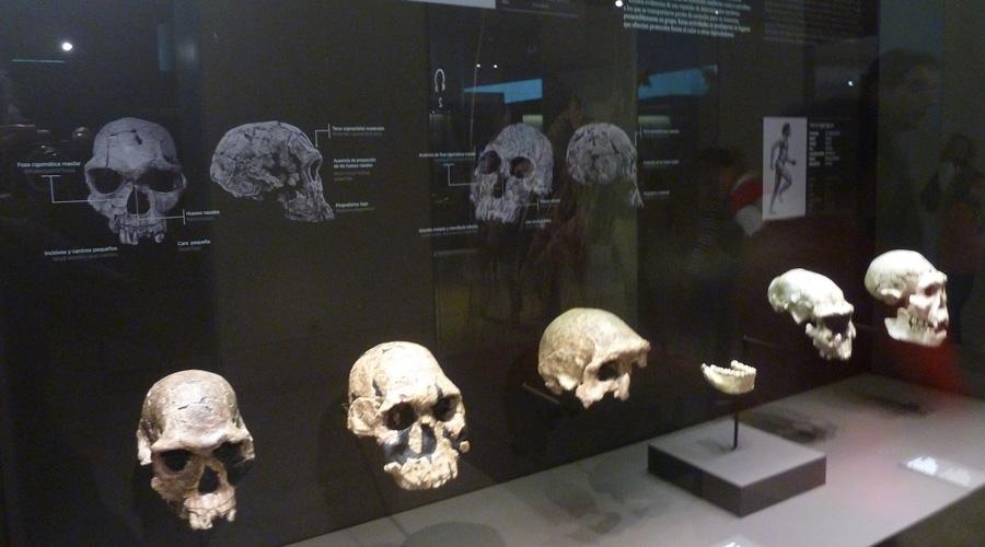Identifican los restos de Homo Sapiens más antigüos de Europa | El Imparcial de Oaxaca