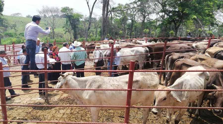 Programa federal entrega ganado de desecho y riesgo sanitario: Jorge López | El Imparcial de Oaxaca