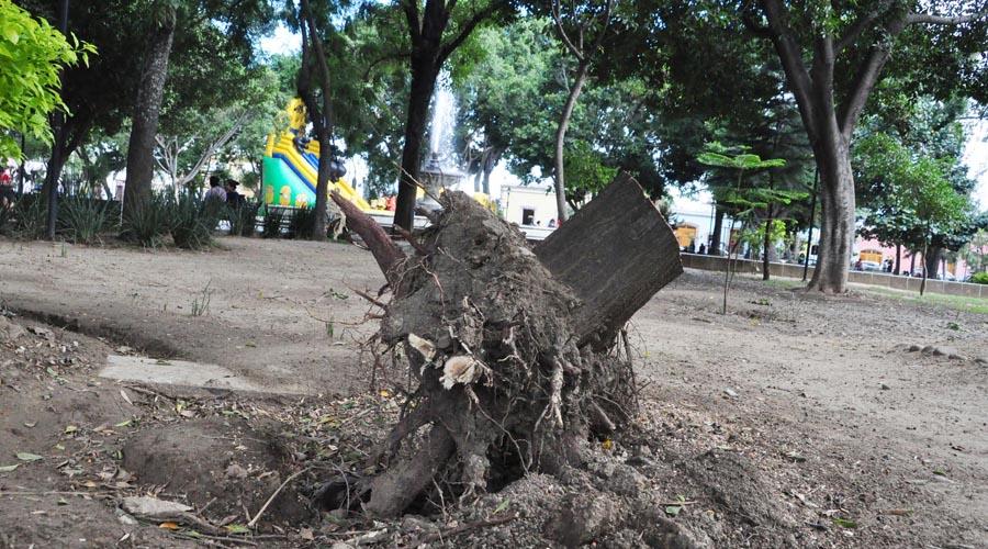 Piden restaurar arbolado y prados en El Llano