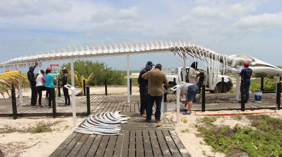 Exhiben esqueleto de ballena encontrada sin vida en Yucatán   El Imparcial de Oaxaca