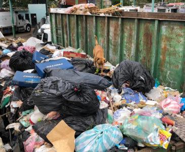 Oaxaca, con basura en la Capital, y a días de la Guelaguetza