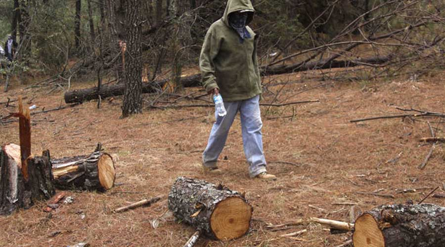 Pide Conafor a la Guardia Nacional para combatir tala ilegal | El Imparcial de Oaxaca